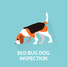 bed bug dog inspections